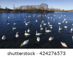 swans and ducks on the... | Shutterstock . vector #424276573