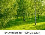 beautiful landscape of green... | Shutterstock . vector #424281334