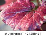 begonia leaves with water drops | Shutterstock . vector #424288414