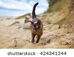 Burmese Cat On The Beach