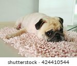 Funny Sleepy Pug Dog With Gum...