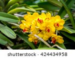 Small photo of Yellow orchid flowers in the park