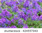 Blooming Blue Flower In The...
