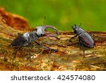Male And Famale Of Insect. Sta...