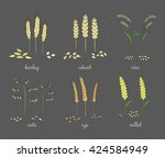 hand drawn cereals and grains... | Shutterstock .eps vector #424584949