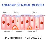 nasal mucosa cells. ciliated ...   Shutterstock .eps vector #424601380