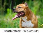 american staffordshire terrier  ... | Shutterstock . vector #424624834