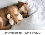 Stock photo one month old terrier mix puppy sleeping in bed with favorite toy 424649320