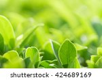 closeup nature view of green... | Shutterstock . vector #424689169