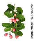 carissa carandas or karonda... | Shutterstock . vector #424700890