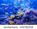 beautiful underwater world | Shutterstock . vector #424782349