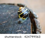 Yellow Snail On Old Tree