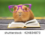 Stock photo funny guinea pig in glasses reading a book outdoors 424834873