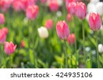 pink tulips on the field | Shutterstock . vector #424935106