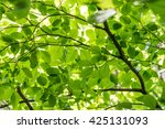 green fresh leaves on a forest... | Shutterstock . vector #425131093