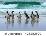 Magellan Penguin  Three Water...