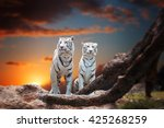 Two White Tiger Sitting On A...