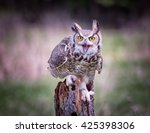 Stock photo gray horned owl 425398306