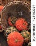 fresh harvested pumpkins for... | Shutterstock . vector #425403394