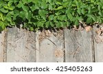 poison ivy  toxicodendron... | Shutterstock . vector #425405263