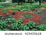 Small photo of Yellow tulips, Alchemilla erythropoda, Sedum telephium 'Herbstfreude', Hosta sieboldiana, Heuchera on the flowerbed, sprinkler with red dyed mulch. Ornamental plants for landscaping.
