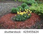 yellow tulips  sedum telephium '... | Shutterstock . vector #425455624
