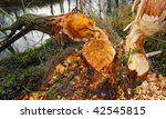 Willowtree Taken Down By Beave...