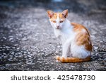 thai cat. thai cat portrait in... | Shutterstock . vector #425478730