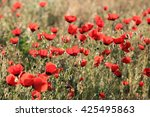 red poppy flowers field  close... | Shutterstock . vector #425495863