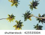 Coconut Palms Against The Blue...