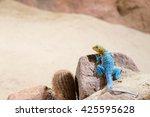 eastern collared lizard  lizard ...   Shutterstock . vector #425595628
