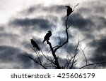 Silhouette Crow On Dry Tree And ...