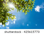 Green Leaf Against Blue Sky