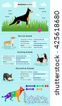 Dogs Breed Infographics Types...