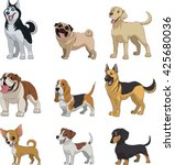 Stock vector vector illustration set of funny purebred dogs on a white background 425680036
