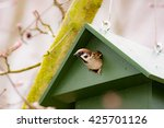 eurasian tree sparrow in a... | Shutterstock . vector #425701126