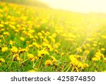 Yellow Blossoming Dandelions...