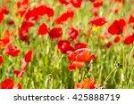 field of red poppy flowers | Shutterstock . vector #425888719