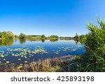 Calm Pond And Water Plants In ...