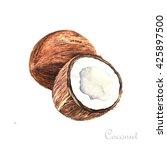 watercolor coconut. coconuts... | Shutterstock . vector #425897500