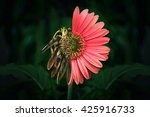 a daisy that is half dead and... | Shutterstock . vector #425916733