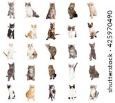 Stock photo large group of cats and kittens on square white background that can be made into repeating pattern 425970490