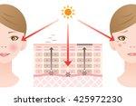 infographic skin illustration.... | Shutterstock .eps vector #425972230