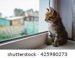 Stock photo kitten looks out the window 425980273