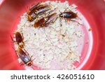 cockroach with food  many... | Shutterstock . vector #426051610