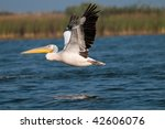pelican in flight | Shutterstock . vector #42606076