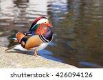 A Colourful Male Mandarin Duck...