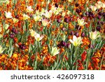 A Flowerbed In Spring Of...
