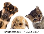 puppy and kitten and rabbit | Shutterstock . vector #426153514