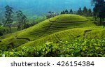 Tea Plantation In Up Country...